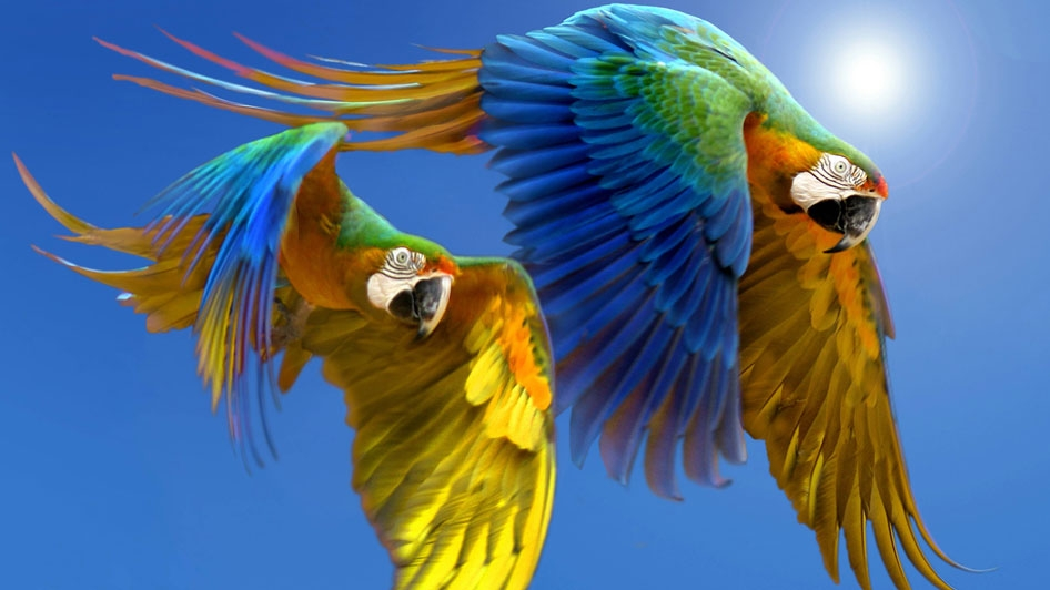 bilder von papageien